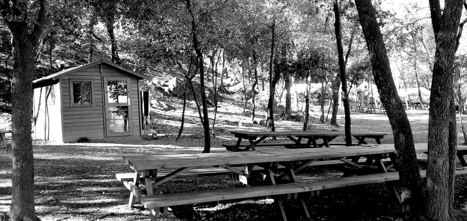 Zona de pícnic dins el bosc amb amplia zona d'ombra, equipada amb taules grans i petites